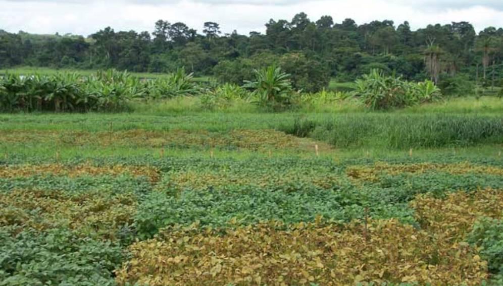 Cuma Bénin - promouvoir soja